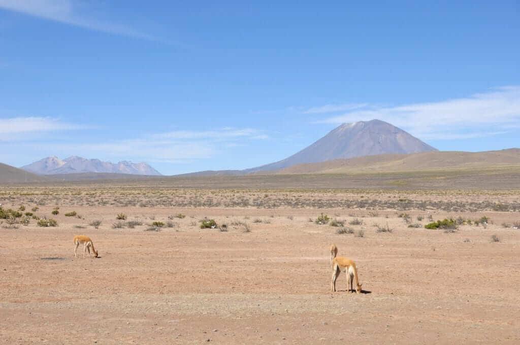 Cañón del Colca, Volcán Misti
