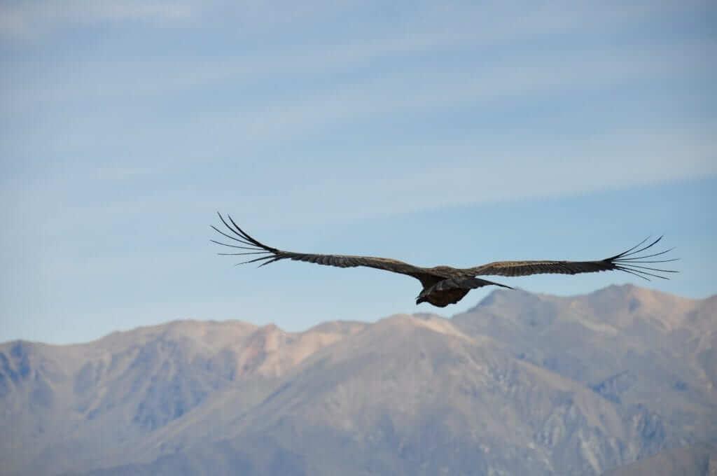 Cañón del Colca Cruz del Condor
