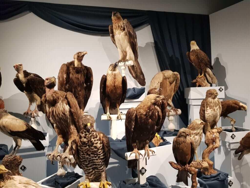 museo de toulouse