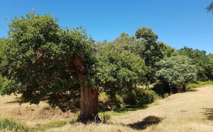 tiempo en Aracena
